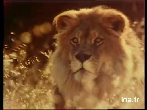 Pub Lion (1980)